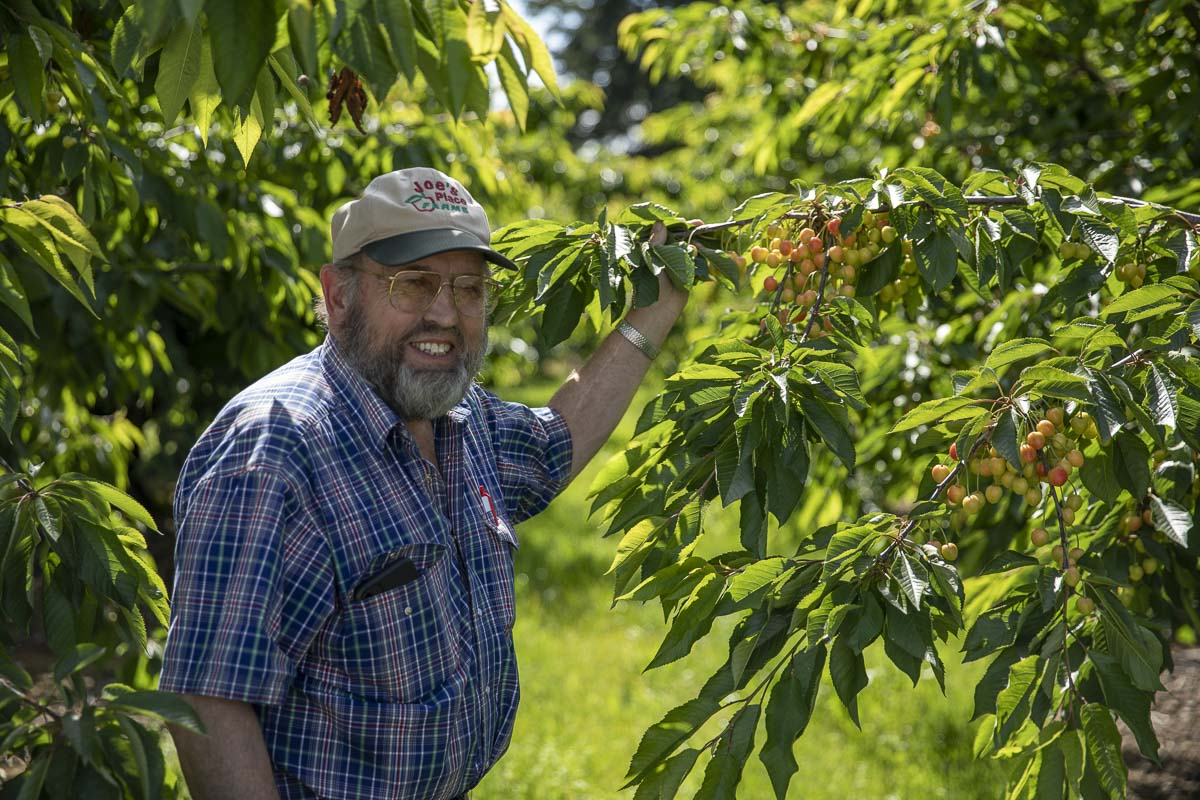 Joe Beaudoin founded Joe's Place Farms 1973 on land his family had owned since the 1940's. Cherries and other fruits are a large staple of the farm, as seen here. Photo by Jacob Granneman