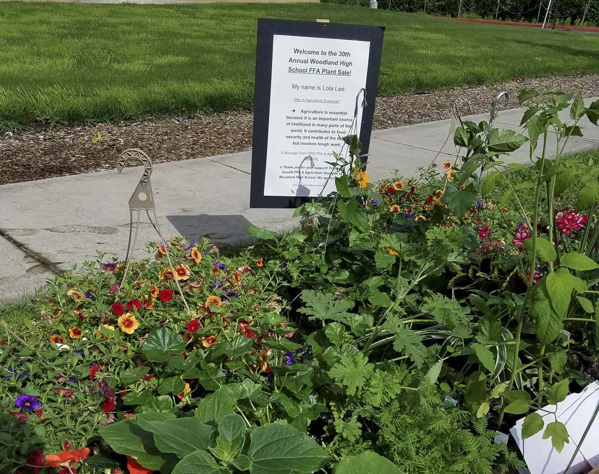 WHS horticulture students collected the plants for each order and placed them at marked station at the curb near the high school. Photo courtesy of Woodland Public Schools