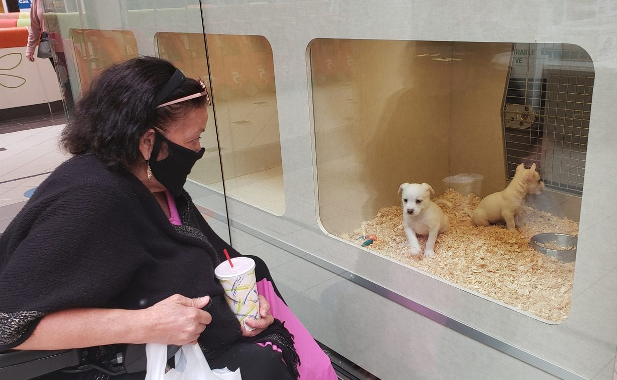 Mary Flores takes a look at some puppies Wednesday at Alley Cat Pet Center at the Vancouver Mall. Flores is a regular at the mall and was thrilled that it reopened Wednesday. Photo by Paul Valencia