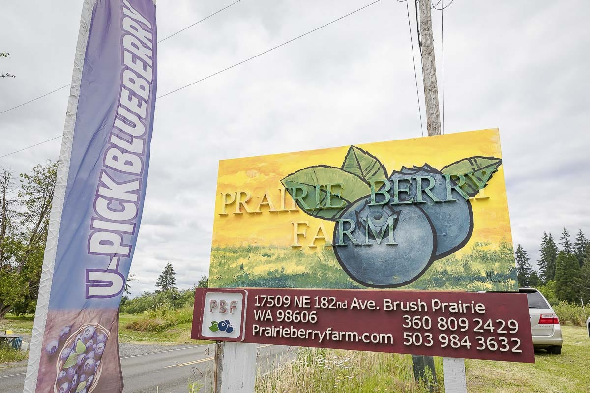 Prairie Berry Farms is one of the featured farms in Saturday's Hockinson Berry Festival. Photo by Mike Schultz