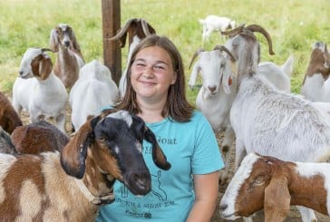 Junior Livestock Auction a go for online