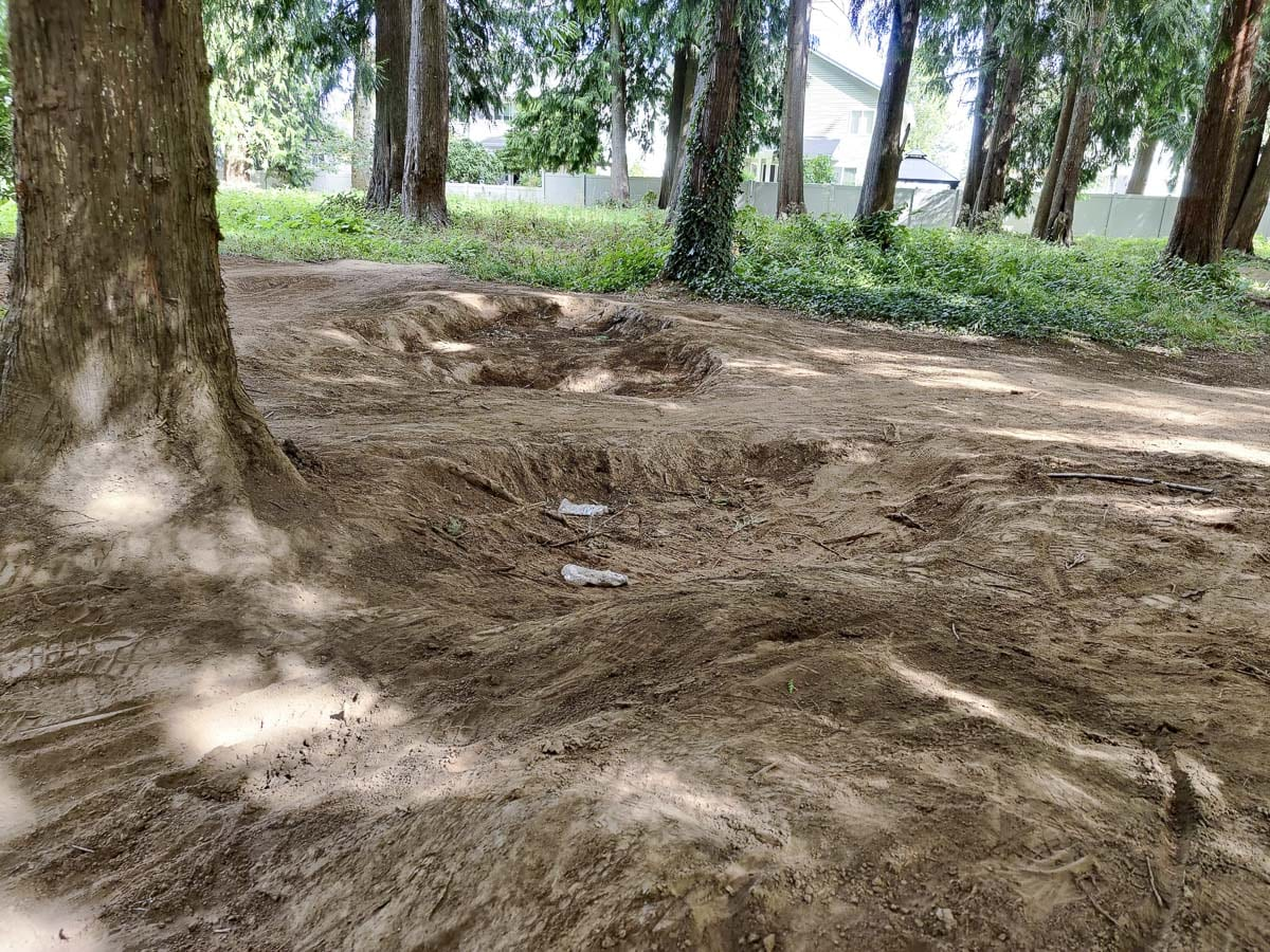 Holes have been dug under cedar trees inside Battle Ground's Cedar Trails Park, exposing the roots and potentially damaging the plants. Photo by Chris Brown