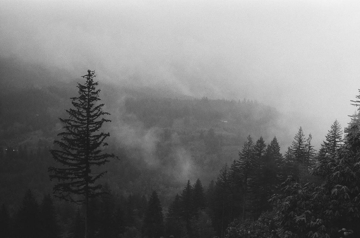 A film photo taken in 2019 from Bell Mountain shows the forests of the Moulton Falls area as they are today, not as they might have been seen in photographs at the time of the burn. Photo by Jacob Granneman