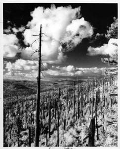 This 1977 photograph displays the slow regrowth of what is now known as the Yacolt Burn State Forest. Photo courtesy of CCHM