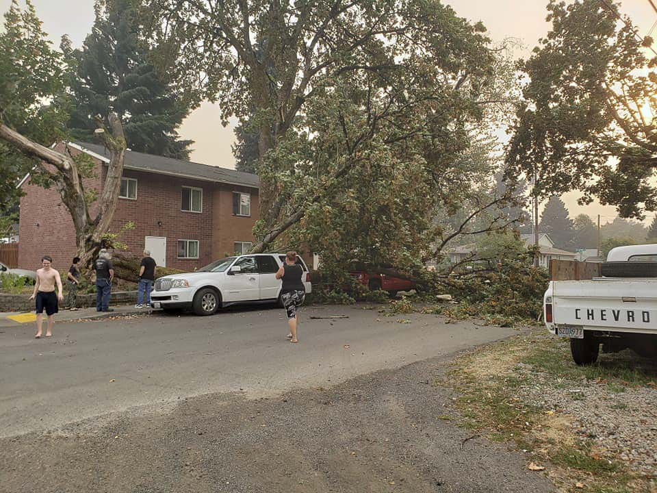 A downed tree damaged vehicles parked along East 32nd Street near Grand Blvd. in Vancouver. Photo courtesy Tawnya Woodruff Clark