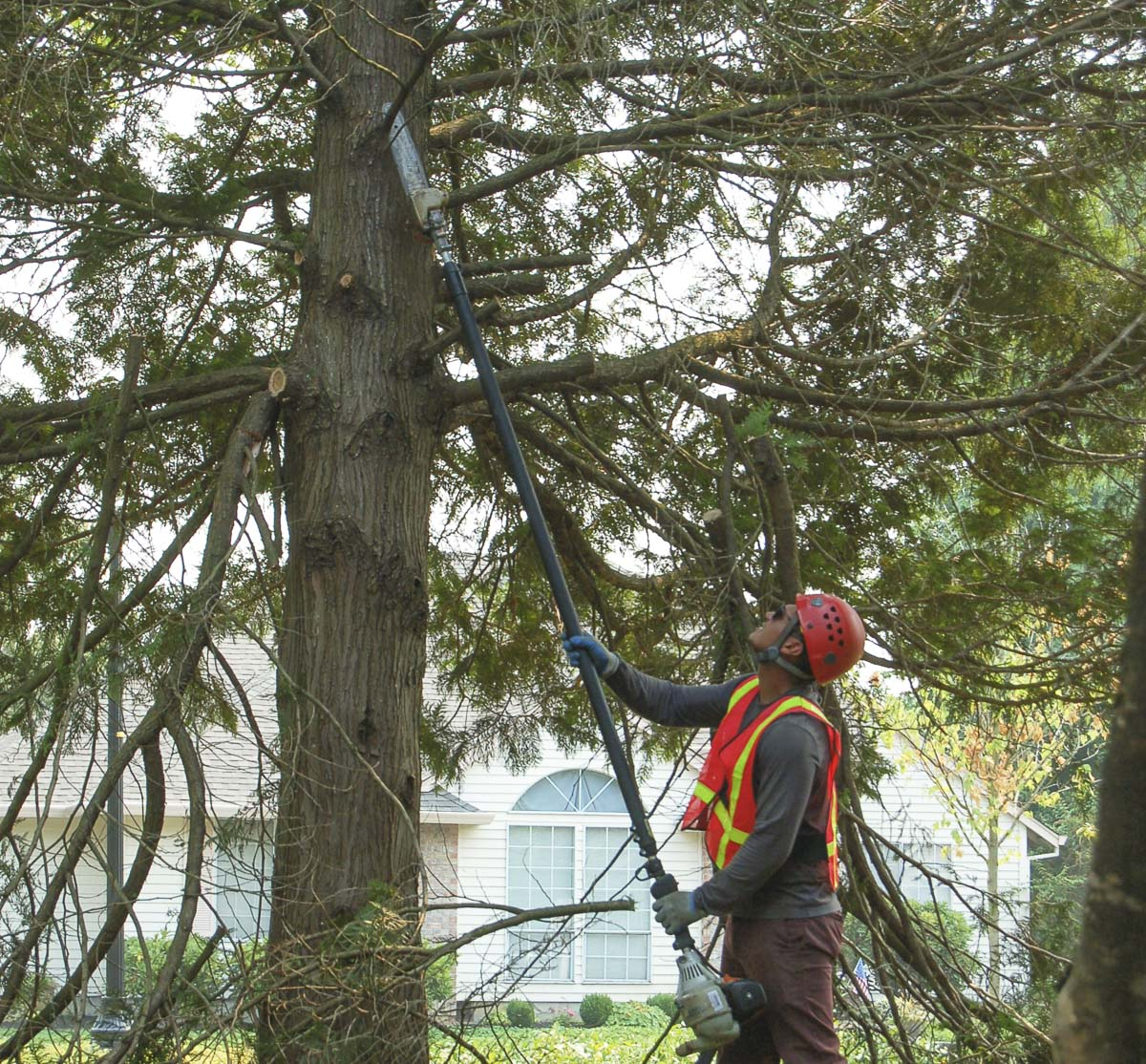 Proper pruning by certified arborists promotes healthy trees. Photo courtesy of city of Vancouver