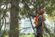 Caring for trees now protects against future damage