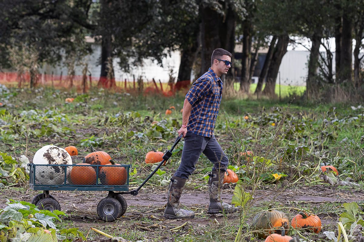 Drew Gustafson of Vancouver pulls back his pumpkin finds after hunting through The Patch's fields. Photo by Mike Schultz