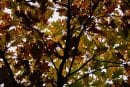Vancouver and Clark County's leaf coupon plan for not falling behind