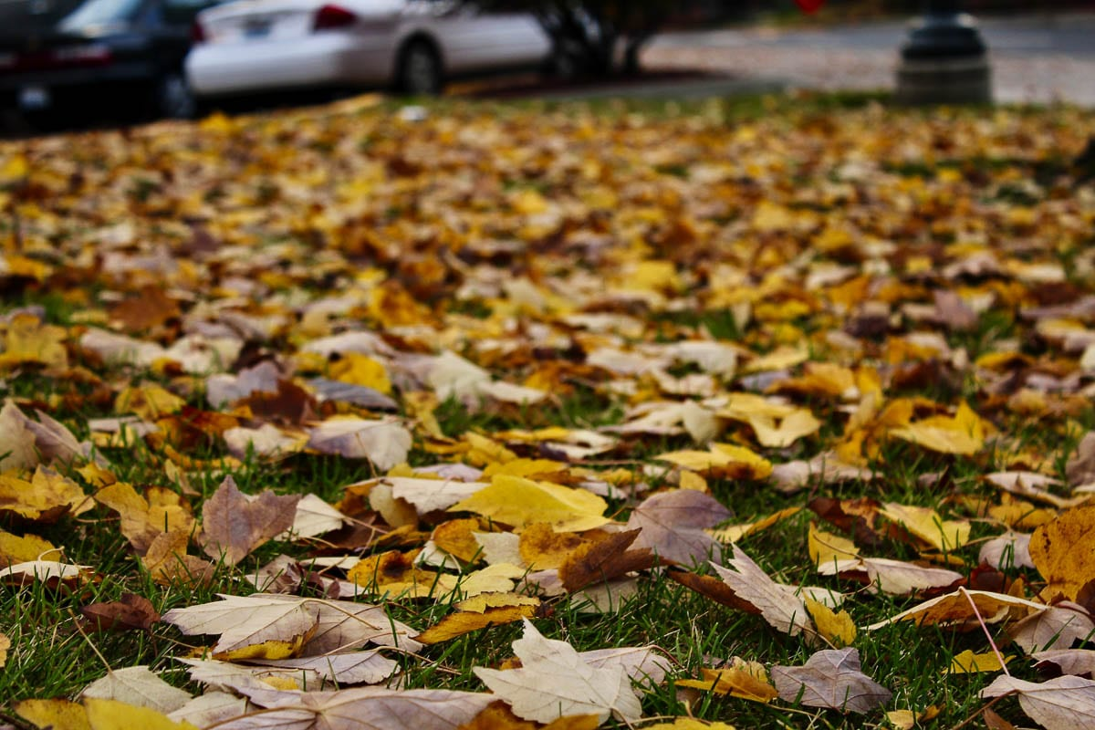 Blowing or raking leaves into the street intentionally, is actually unlawful in Clark County. The Leaf Coupon Program is a free, legal alternative. Photo by Jacob Granneman