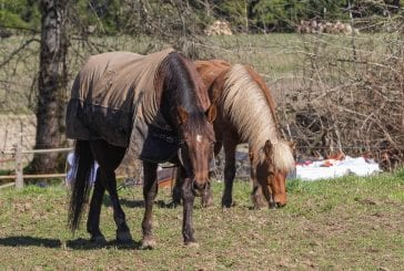 Clark County equestrian community shares thoughts on potential code changes