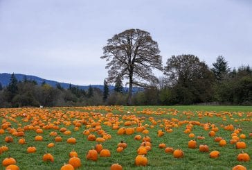VIDEO: Heart of the Harvest 2020 — Vancouver Pumpkin Patch