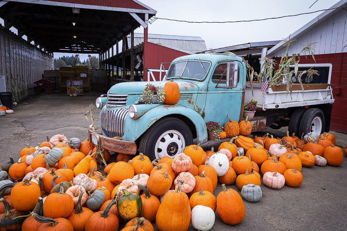 More unique types of pumpkins are available pre-picked at the entrance area to the farm. Photo by Mike Schultz