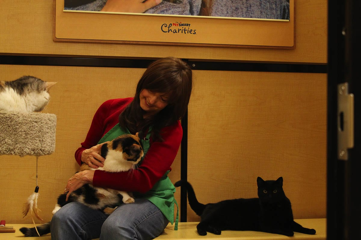 Diane Stevens during her volunteer shift at the Furry Friends Adoption Center