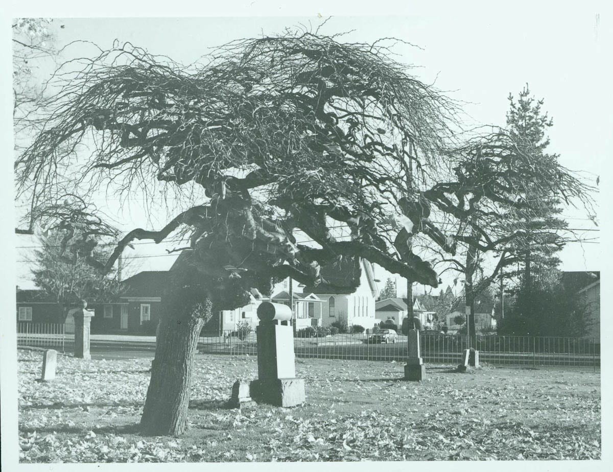 The Old City Cemetery has now been added to CCHM registry of historical sites as of 2020. This photo of it was taken by Hermine Duthie Decker in 1976. Photo courtesy of CCHM