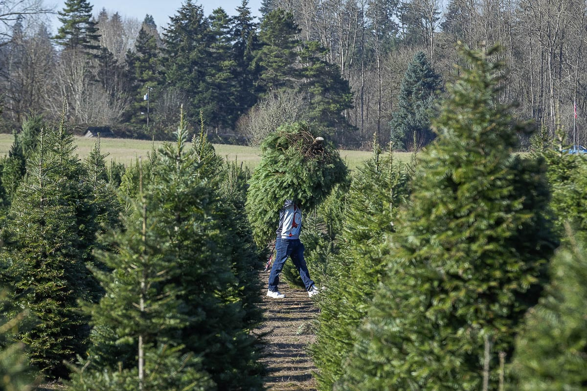 The Tree Wisemans has been a staple of the holiday season in Clark County for decades, but is still seeing new customers each year. Photo by Mike Schultz