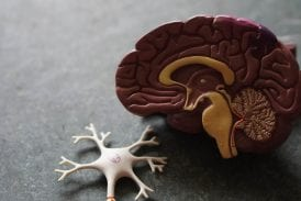 Alzheimer's research made massive leaps forward over the past year
