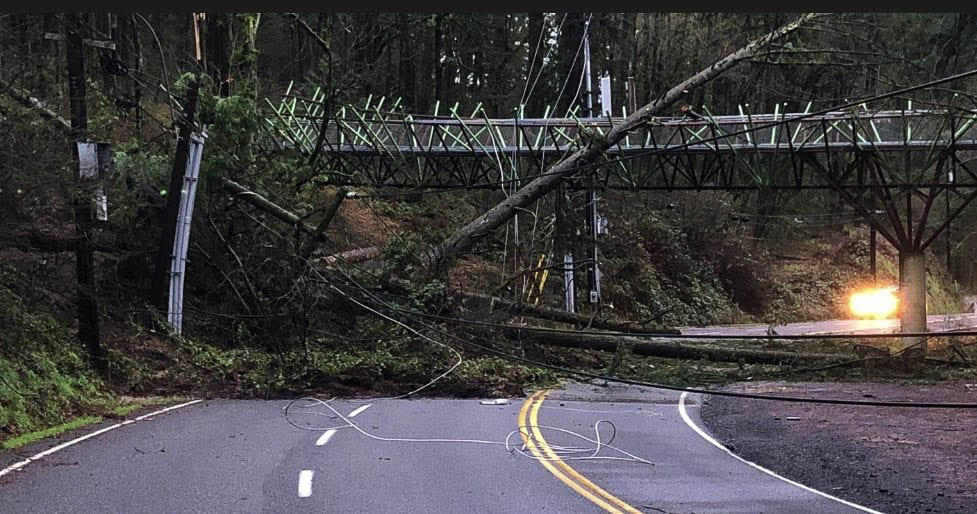Trees and powerlines were brought down by a debris slide on West Burnside west of Portland overnight, damaging a foot bridge. Photo courtesy Portland Parks and Rec