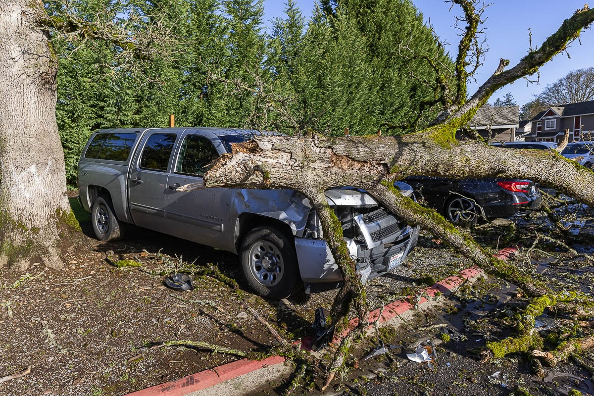 A fallen tree damaged a truck near the Fairview Court Apartments on NE 109th Ave in Vancouver early Wednesday morning. Photo by Mike Schultz