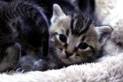 Area kitten lovers encouraged to become a 'foster parent'