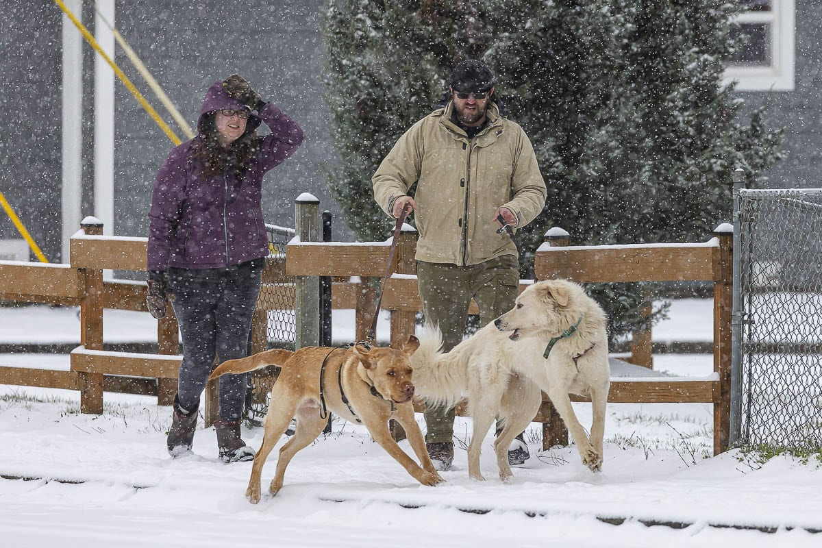 Marcus Davis and Shareece Allen walk their dogs Ruby and Dante along 33rd Street on a snowy Friday morning. Photo by Mike Schultz