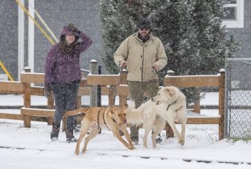 PHOTOS: Friday snow in Clark County