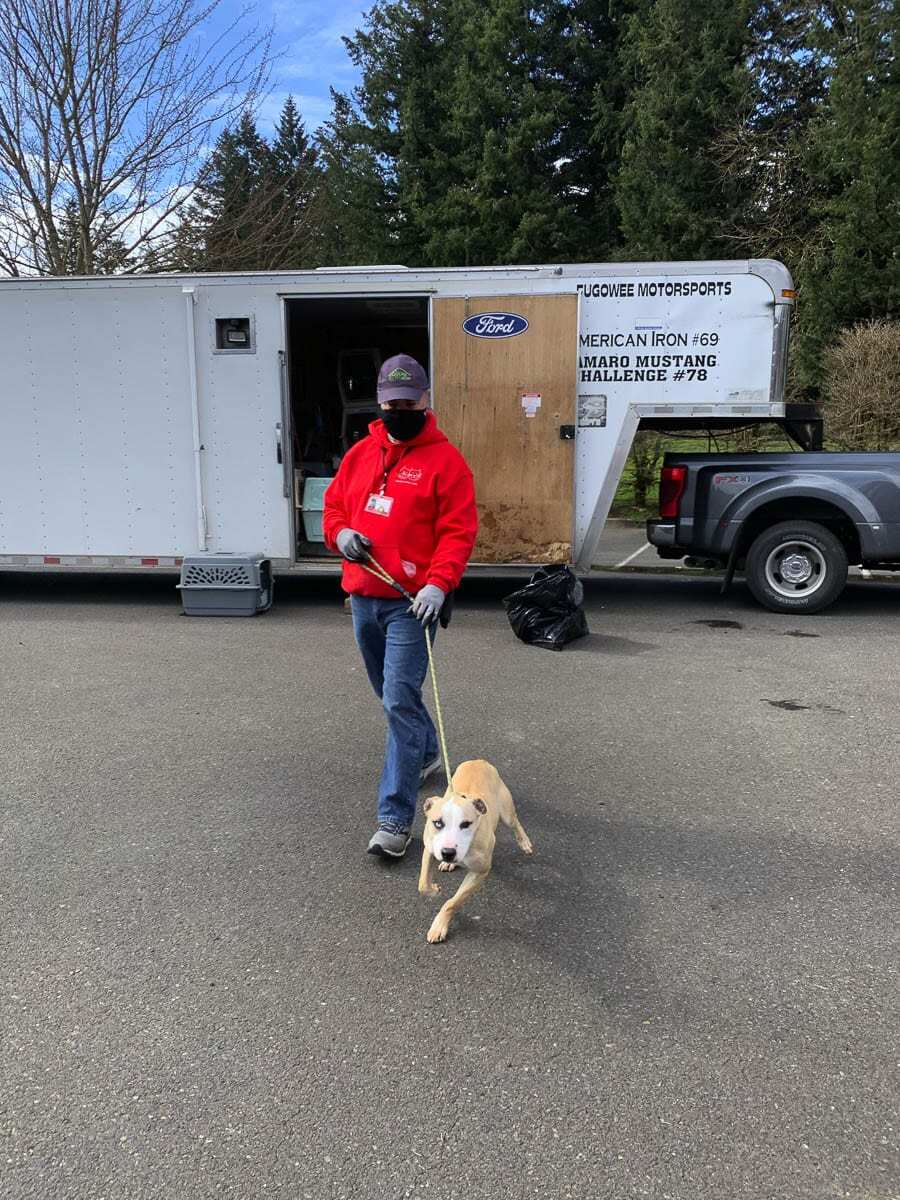 In the aftermath of recent storms, Texas animal shelters are seeking to repair damages and resume crucial operations. Photo courtesy of Humane Society for Southwest Washington