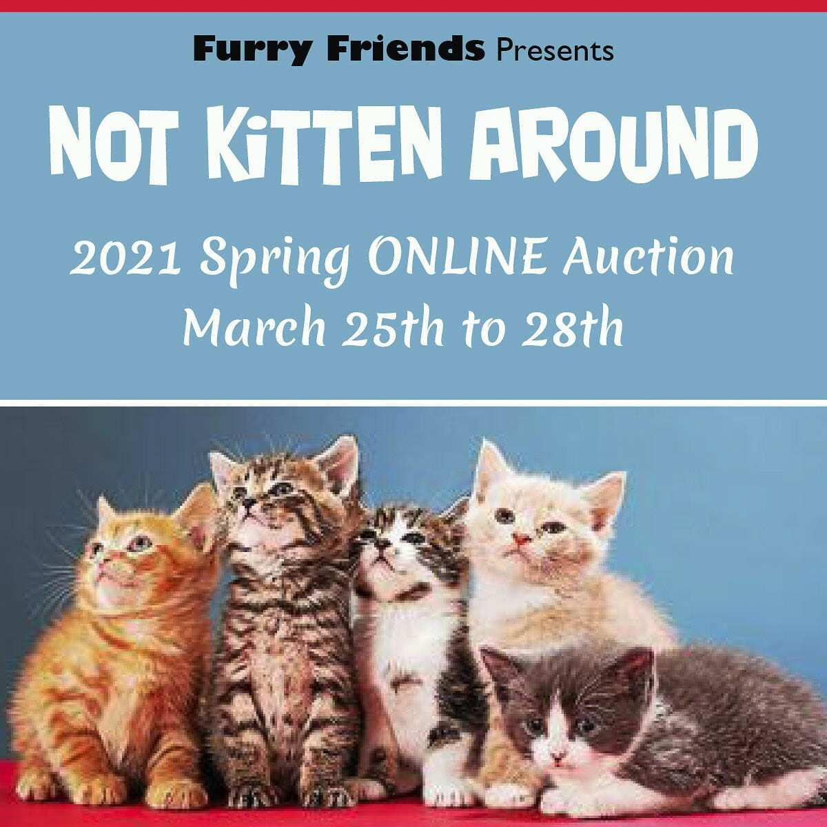 The auction's name 'Not Kitten Around' is to bring attention to Kitten Season. Photo courtesy of Furry Friends