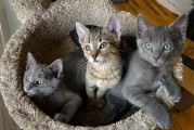 Area cat rescue to host 'Not Kitten Around' online auction