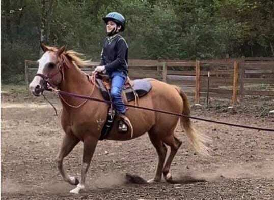 Sadie the horse has been a fixture at Healing Winds Therapeutic Riding Center for more than a dozen years. The center is raising funds to help pay Sadie's medical bill after a recent life-saving surgery. Photo courtesy Healing Winds
