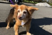 Humane Society for Southwest Washington receives Texas-area dogs and returns much-needed shelter supplies