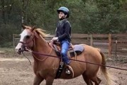 Healing Winds Therapeutic Riding Center is raising funds for 'Sadie'