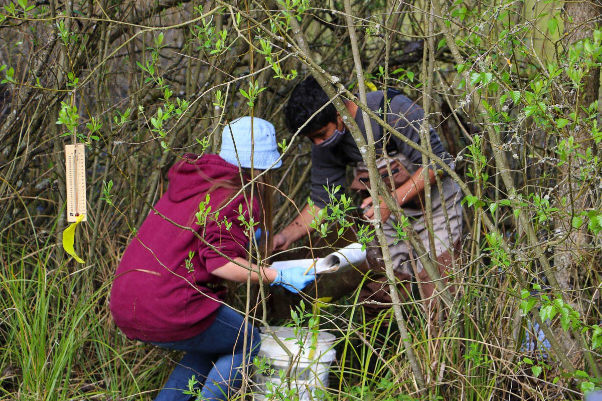 CASEE students Adalie Smithline and Eric Morales collect traps set up in a pond on the campus. Photo courtesy of Battle Ground School District