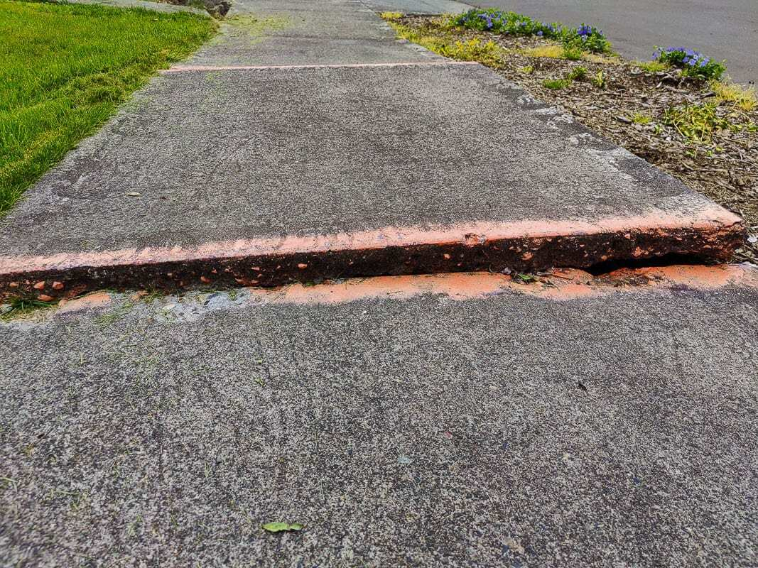 Lifted sidewalks, like this one, present problems all over Clark County and can cost homeowners thousands of dollars to repair. Photo by Chris Brown